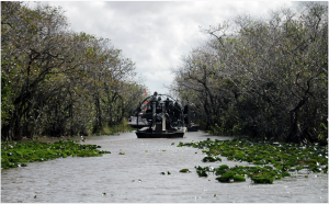 everglades, airboat tours